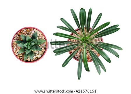 Top view of two small plant pots isolated. Top view - stock photo