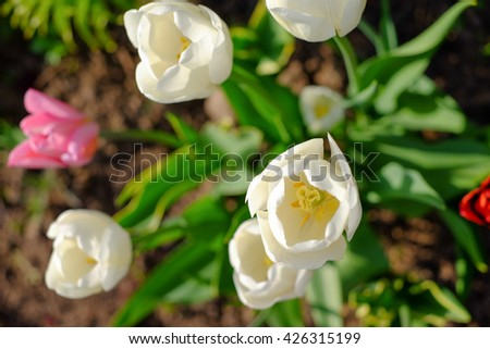 top view on bouquet from white pink red bloom of growing flowers in garden - stock photo