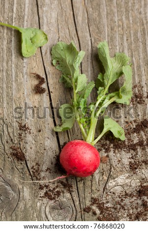 Top view on fresh radish from soil on old wooden table - stock photo