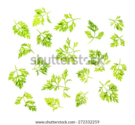 Top view scattered fresh dill leaves, isolated on white background. - stock photo