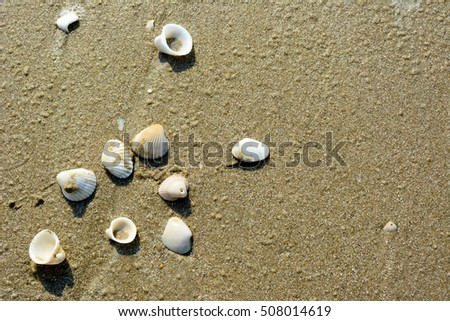 top view sea shell background.