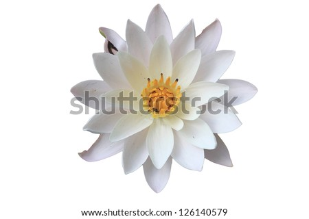 top view water lily in isolated white beautiful - stock photo