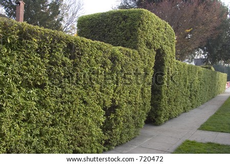 Topiary hedge with an entry arch, along a sidewalk.