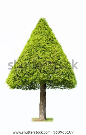 topiary landscape plant in the form of a christmas tree,  isolated on white - stock photo