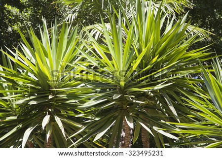 Tops of palm trees in the backlight - stock photo