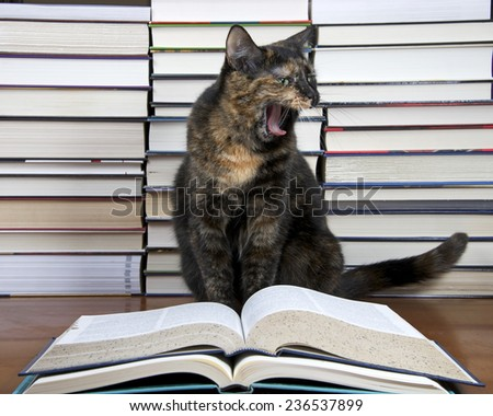 Torbie Tourteshell Tabby Cat sitting in front of piles of books presumably reading a large book. Yawning looks like yelling, screaming, shouting, laughing - stock photo