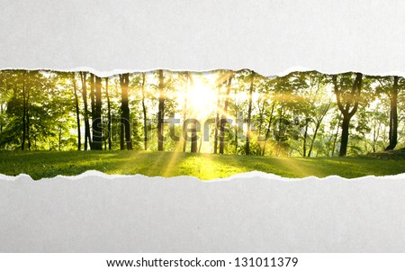 torn paper and  green forest background - stock photo