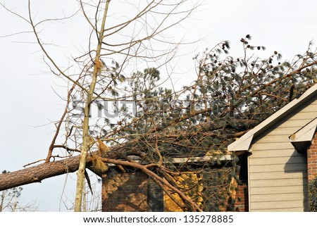 tornado damaged house with a fallen pine tree on the rooftop. Close-up. - stock photo