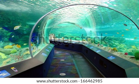 TORONTO - NOVEMBER 15: The Ripley's Aquarium of Canada on November 15, 2013 in Toronto. The Aquarium is a 12,500 square-metre with more than 5.7 million litres of water. - stock photo