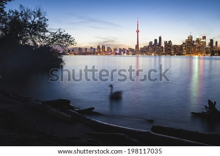 Toronto Skyline at Dusk View from Toronto Island with Swan - stock photo