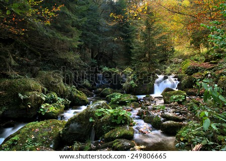 torrent in the black forest, Germany - stock photo
