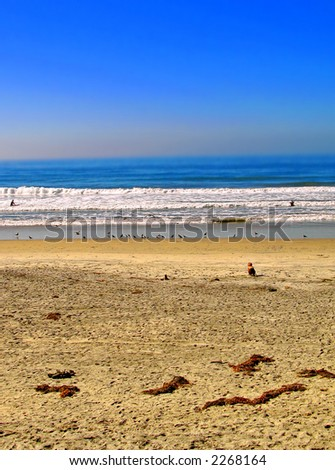 Torrey Pines (San Diego, California) - stock photo