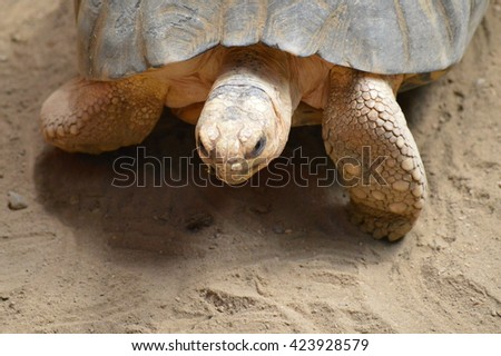 Tortoise  - stock photo