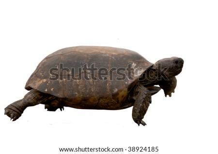 Tortoise Cut Out - stock photo