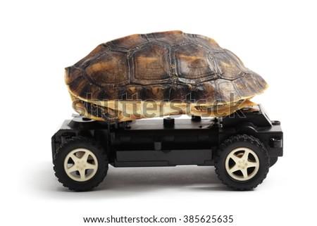 Tortoise riding on toy car, isolated on white background. - stock photo
