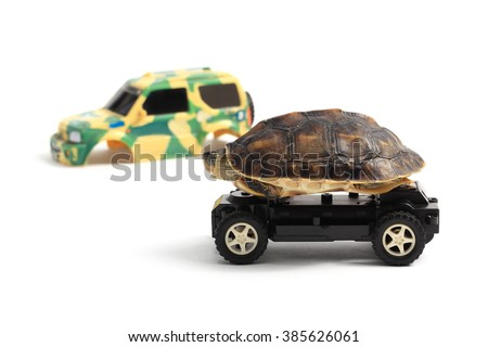 Tortoise riding on toy car with exterior lying on the side, isolated on white background.  - stock photo