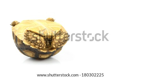 Tortoise, upside down, on white background. - stock photo