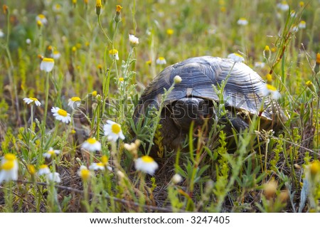 Tortoises ( turtle) in natural area