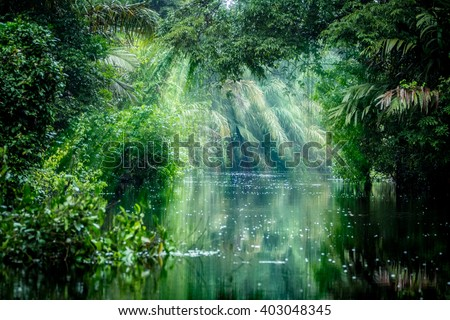 Tortuguero National Park, Rainforest, Costa Rica, Caribbean coast, Central America - stock photo