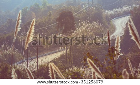 Tortuous road on top of the mountain with beautiful wild flower along side, Nan province, Thailand in vintage tone  - stock photo