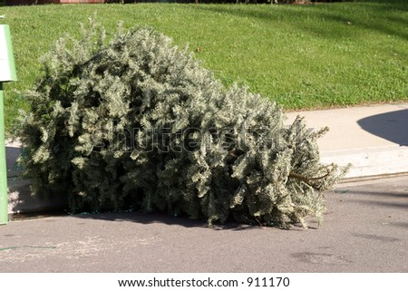 tossed out xmas tree in late January ready for the trash man - stock photo
