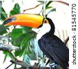 Toucan bird - stock photo