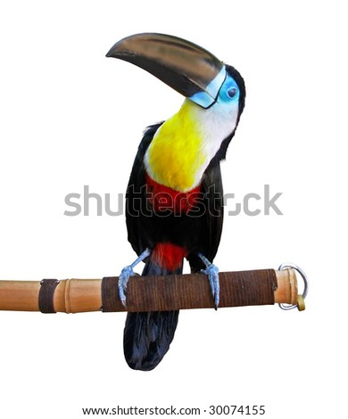 Toucan isolated on white.     More in my gallery - stock photo