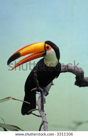 Toucan posing on a branch.