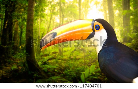 toucan withrain forest with fogs and misty lights early in the morning - stock photo