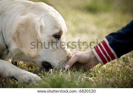 Touching the dog