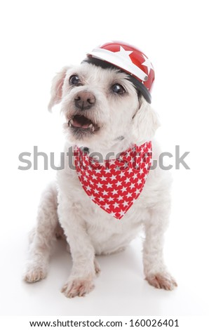 Tough biker dog wearing a red motorcycle helmet and bandana barking orders or being menacing.  White background.
