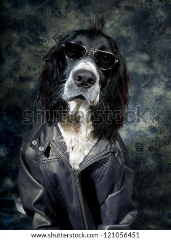 Tough dog with an attitude and leather jacket - stock photo