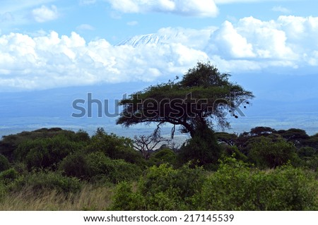 Tourism in the African savannah in Kenya - stock photo