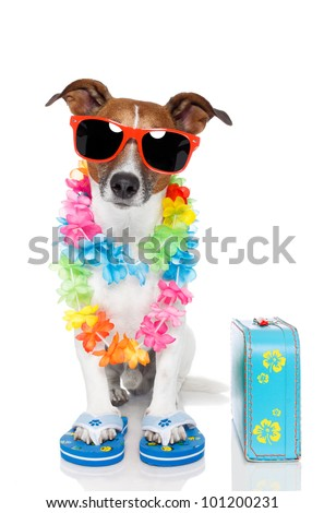 tourist dog with hawaiian  lei and a bag - stock photo