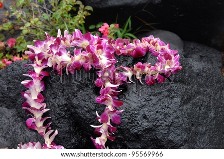 Tourist leaves token offering of orchid lei on black lava stone.  Stone is wet and water drops cling to lei.