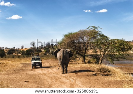 Tourist on safari taking pictures of Elephant passing by at the Serengeti National Park, Tanzania - stock photo
