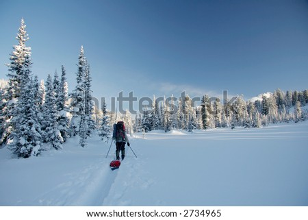 Tourist skier in winter forest - stock photo