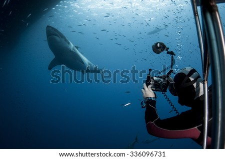 Tourist Taking a Picture of a Great White Shark - stock photo
