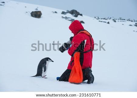 Tourist taking photo of Chinstrap penguin, Antarctica - stock photo