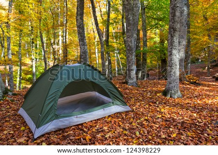 touristic camp in a forest