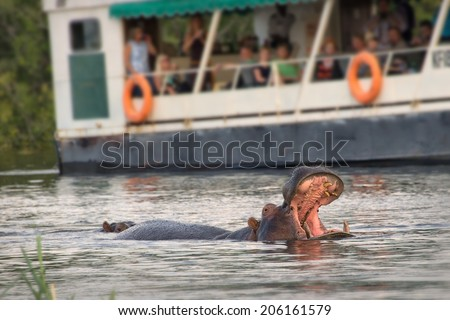 Tourists observing an hippo on the Zambeze river, Zambia - stock photo