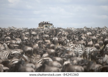 Tourists watching large herd of wildebeest and zebras at the Serengeti National Park, Tanzania, Africa - stock photo