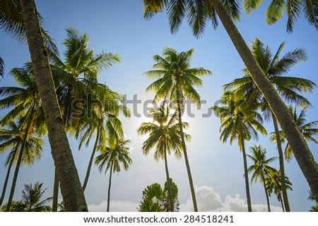 Towering coconut trees against blue sky and sunrise - stock photo