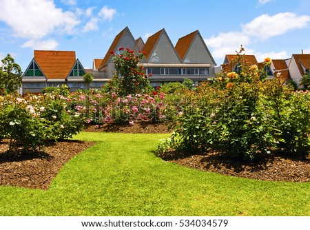 Townhouses near garden of roses at  sunny day in Auckland, New Zealand.