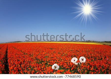 Toy bright sun shines blooming buttercups - stock photo