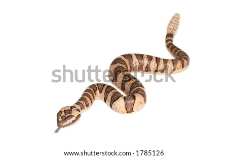 toy rattlesnake on isolated white background: version two - stock photo