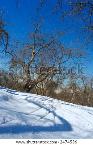 Traces from ski walk in park at a clear sunny winter day - stock photo