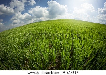 Traces in fresh Barley field - taken with fisheye lens - stock photo