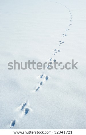 Traces of a hare on a snow - stock photo