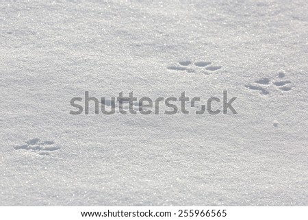 Traces of an animal in the snow. - stock photo